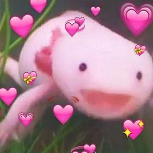 Axolotl Con Cara de Felicidad