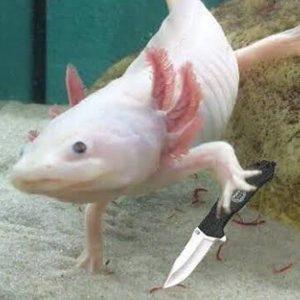 Axolotl con cuchillo
