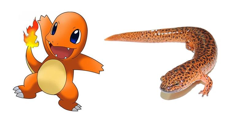 charmander salamandra comparacion