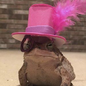 Sapo con sombrero