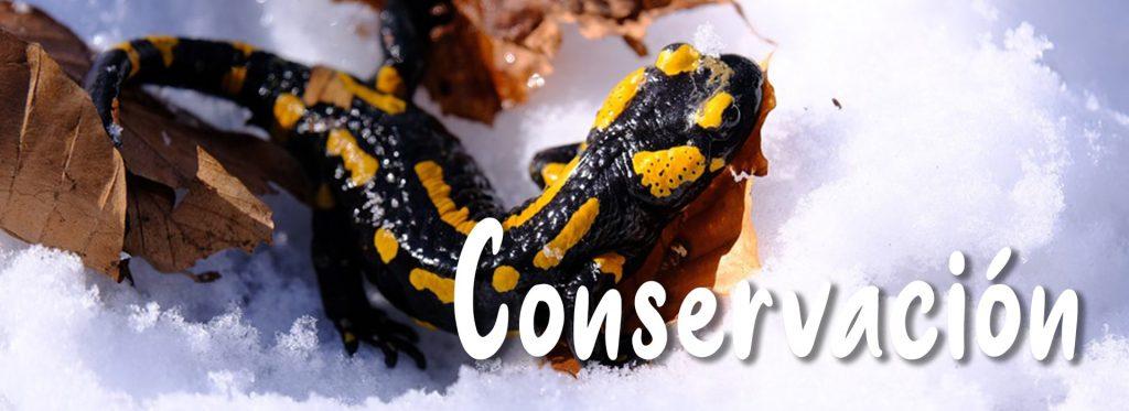 conservación de los anfibios