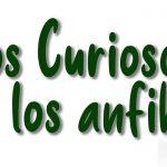 datos curiosos anfibios