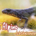 triton alpino mascota nueva