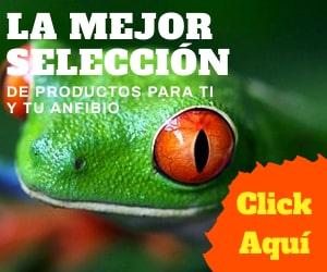 banner de tienda anfibios