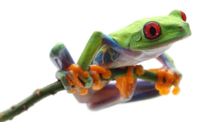 anfibios mascota cual es el mejor